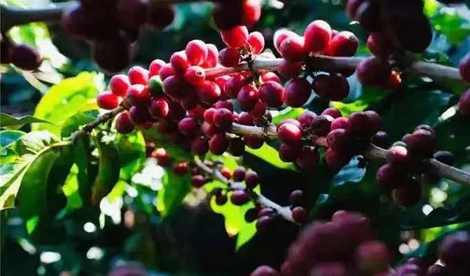云南咖啡是下一个风向?三顿半的咖啡包装给你全新体验!